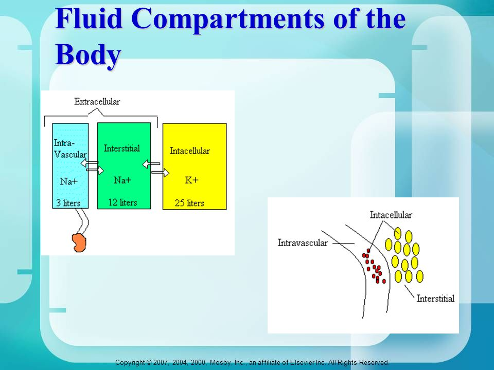 Fluid Compartments of the Body