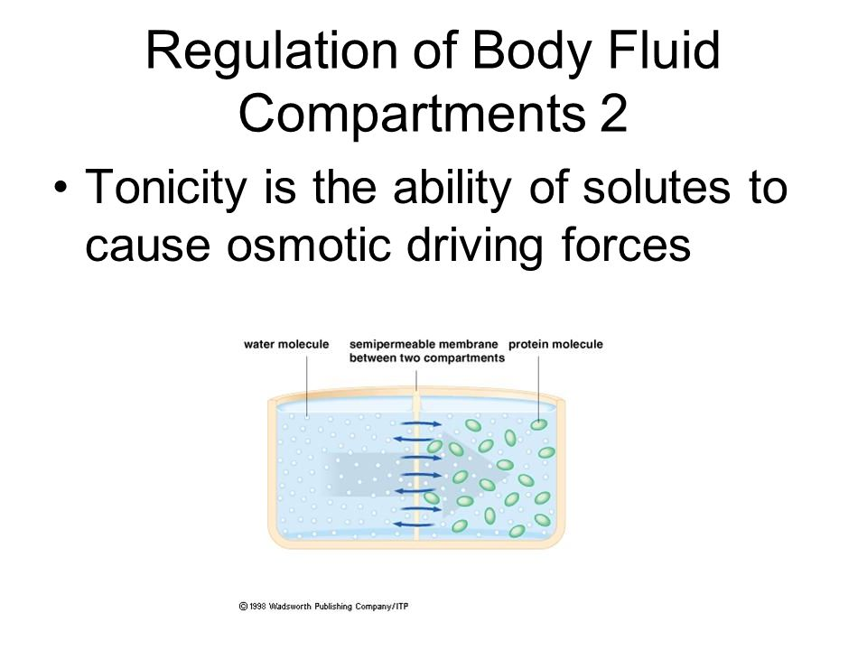 Regulation of Body Fluid Compartments 2