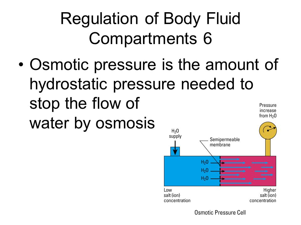 Regulation of Body Fluid Compartments 6