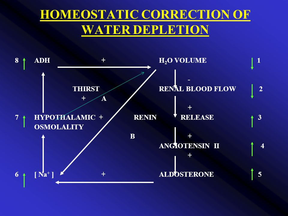 HOMEOSTATIC CORRECTION OF WATER DEPLETION