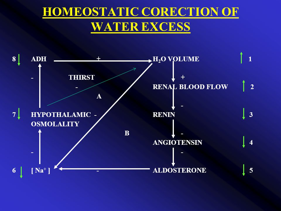 HOMEOSTATIC CORECTION OF WATER EXCESS