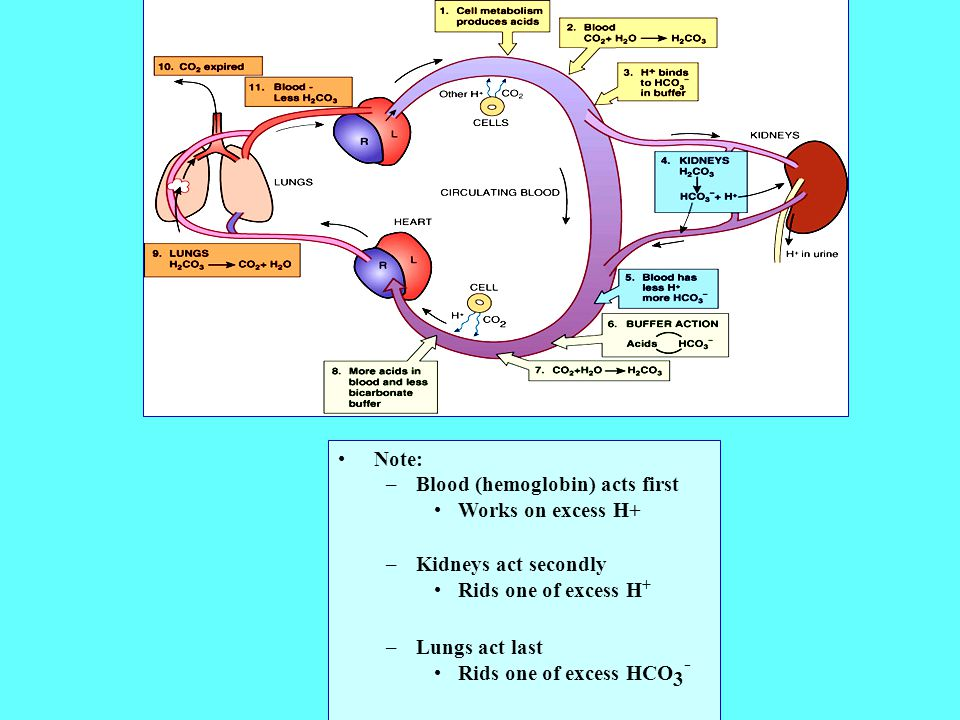 Note: Blood (hemoglobin) acts first. Works on excess H+ Kidneys act secondly. Rids one of excess H+