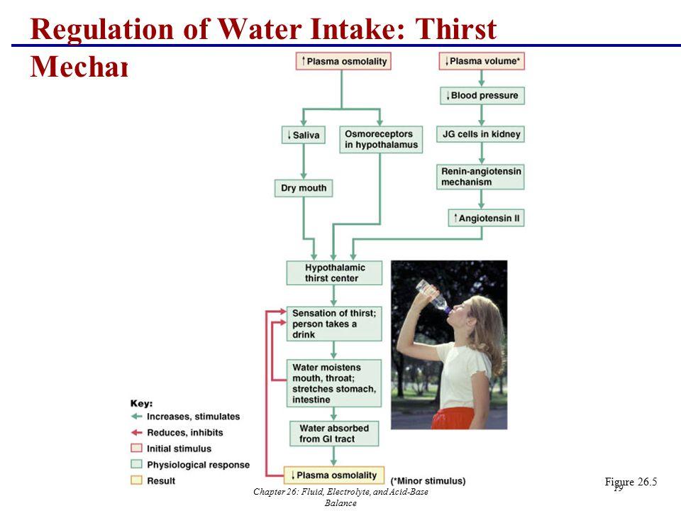 Regulation of Water Intake: Thirst Mechanism