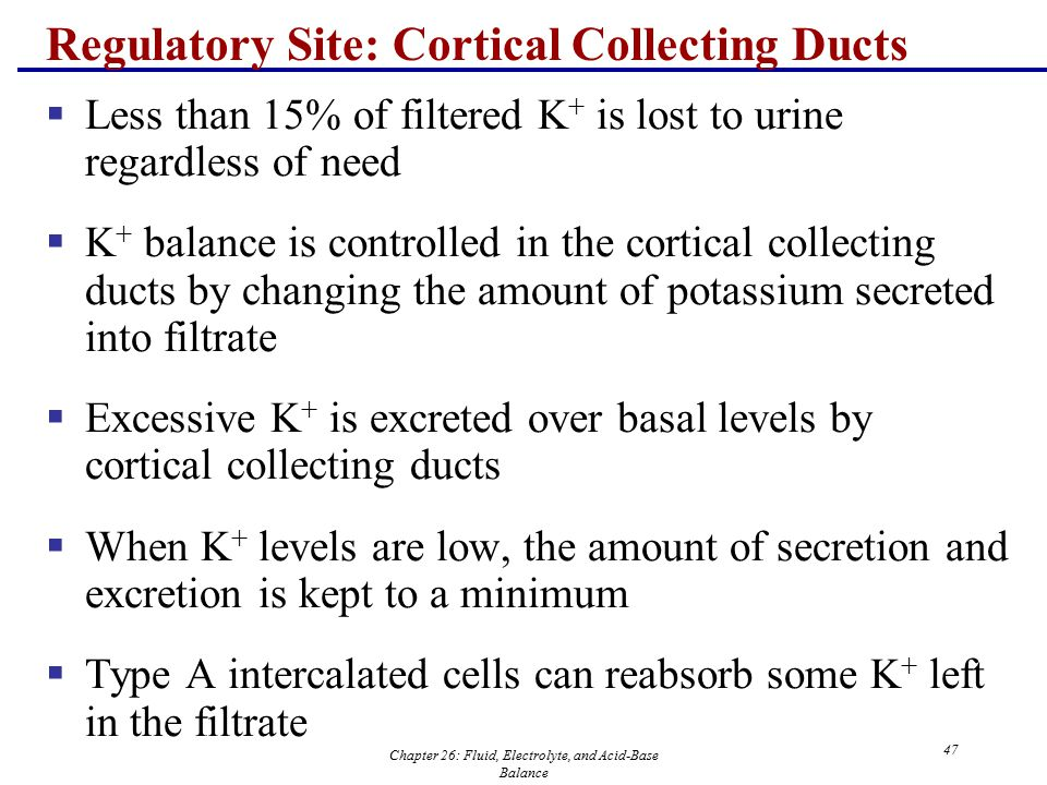 Regulatory Site: Cortical Collecting Ducts