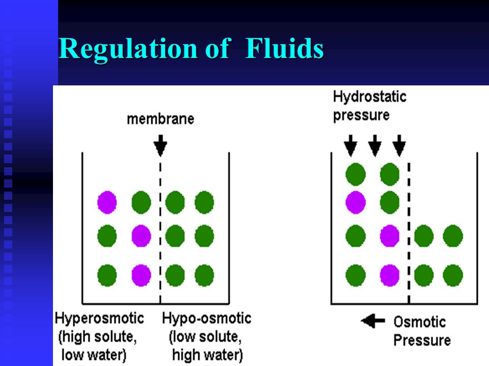 Regulation of Fluids