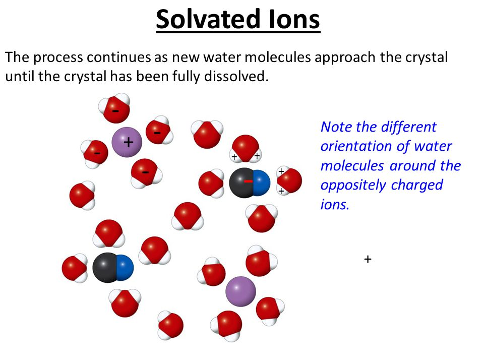 Solvated Ions The process continues as new water molecules approach the crystal until the crystal has been fully dissolved.
