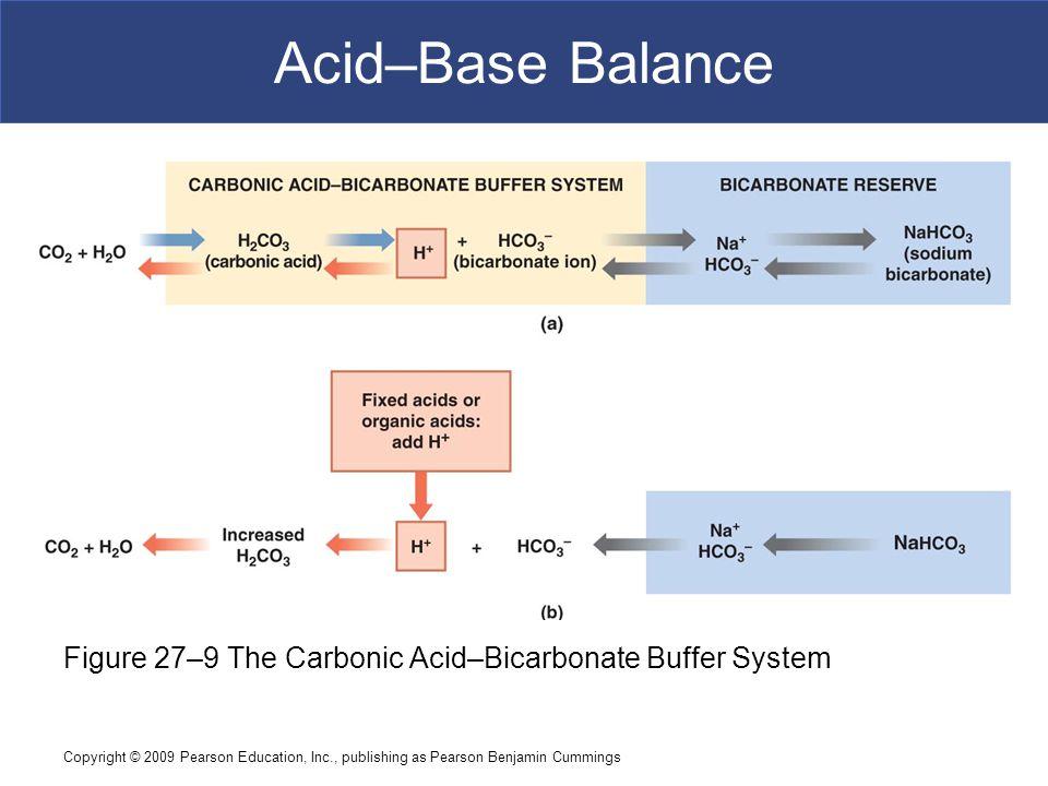 Acid–Base Balance Figure 27–9 The Carbonic Acid–Bicarbonate Buffer System.