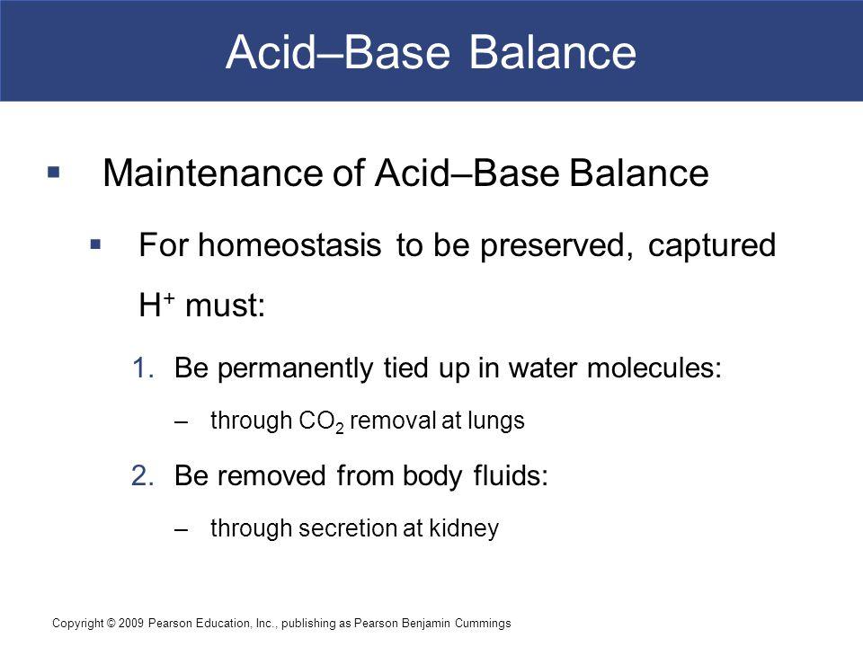 Acid–Base Balance Maintenance of Acid–Base Balance