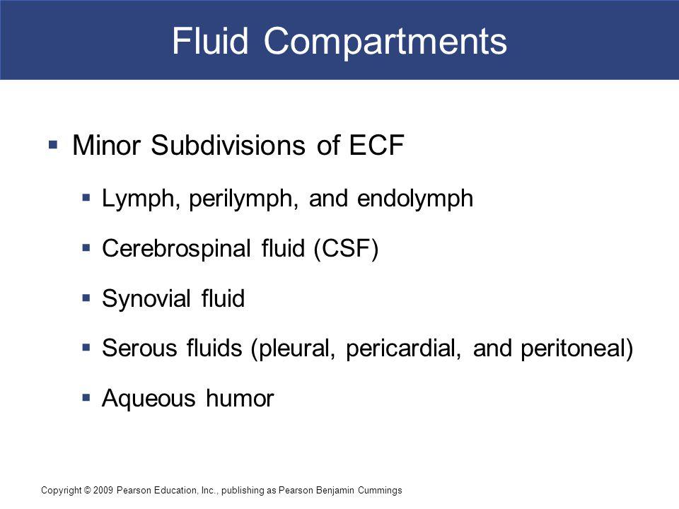 Fluid Compartments Minor Subdivisions of ECF