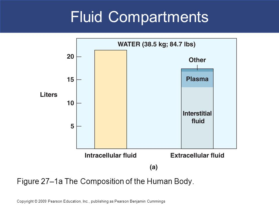 Fluid Compartments Figure 27–1a The Composition of the Human Body.