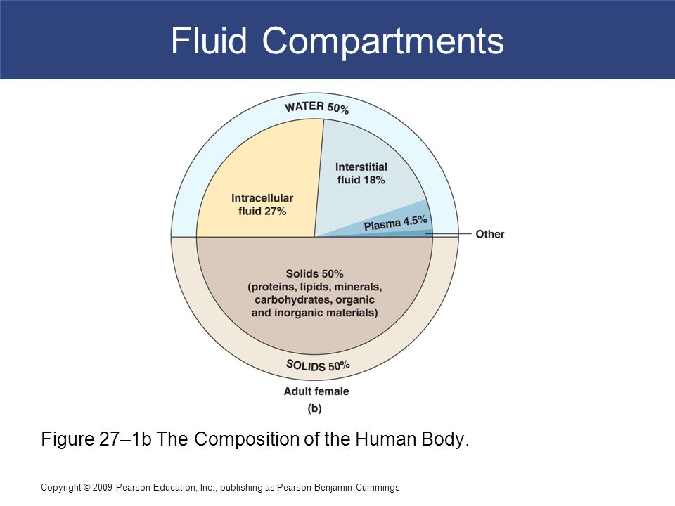 Fluid Compartments Figure 27–1b The Composition of the Human Body.