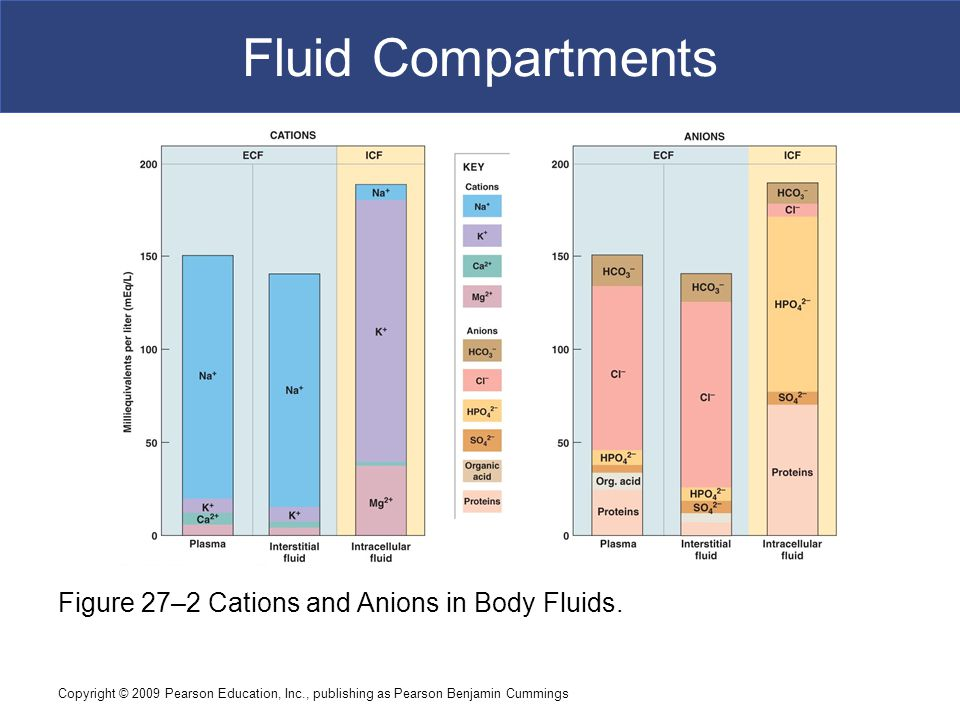Fluid Compartments Figure 27–2 Cations and Anions in Body Fluids.