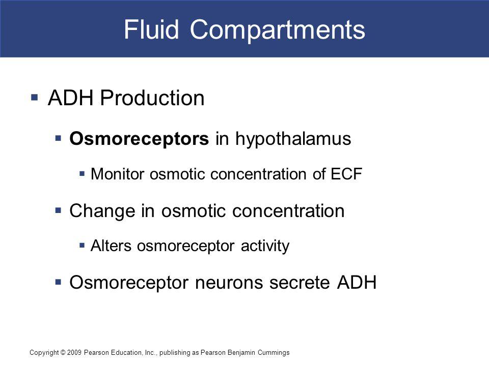 Fluid Compartments ADH Production Osmoreceptors in hypothalamus