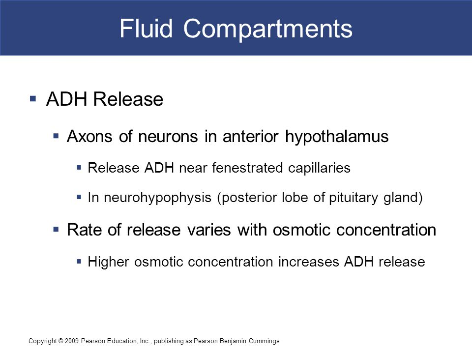 Fluid Compartments ADH Release