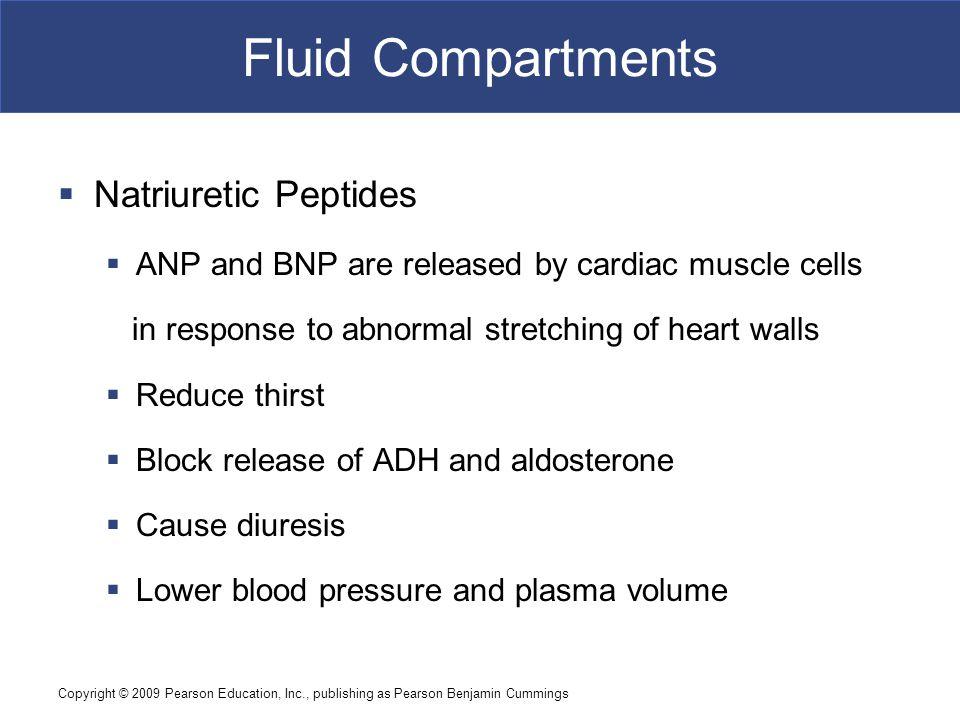 Fluid Compartments Natriuretic Peptides