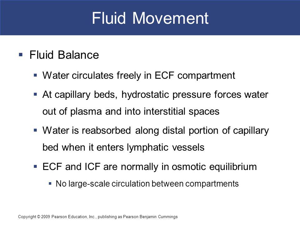 Fluid Movement Fluid Balance