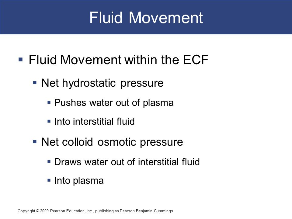 Fluid Movement Fluid Movement within the ECF Net hydrostatic pressure