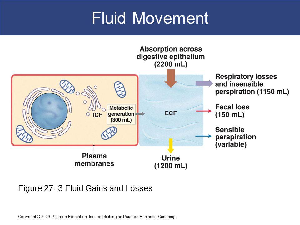 Fluid Movement Figure 27–3 Fluid Gains and Losses.