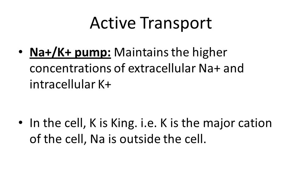 Active Transport Na+/K+ pump: Maintains the higher concentrations of extracellular Na+ and intracellular K+