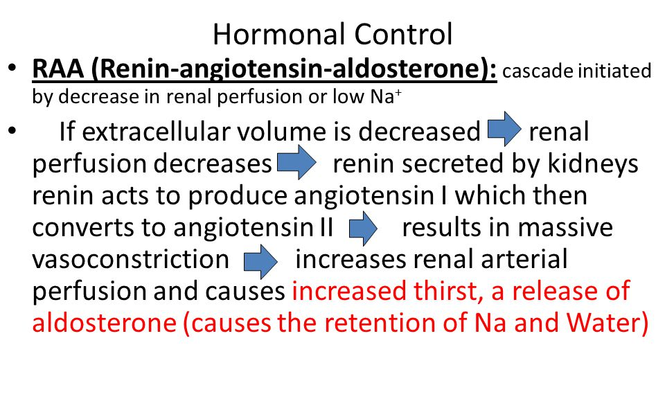 Hormonal Control RAA (Renin-angiotensin-aldosterone): cascade initiated by decrease in renal perfusion or low Na+