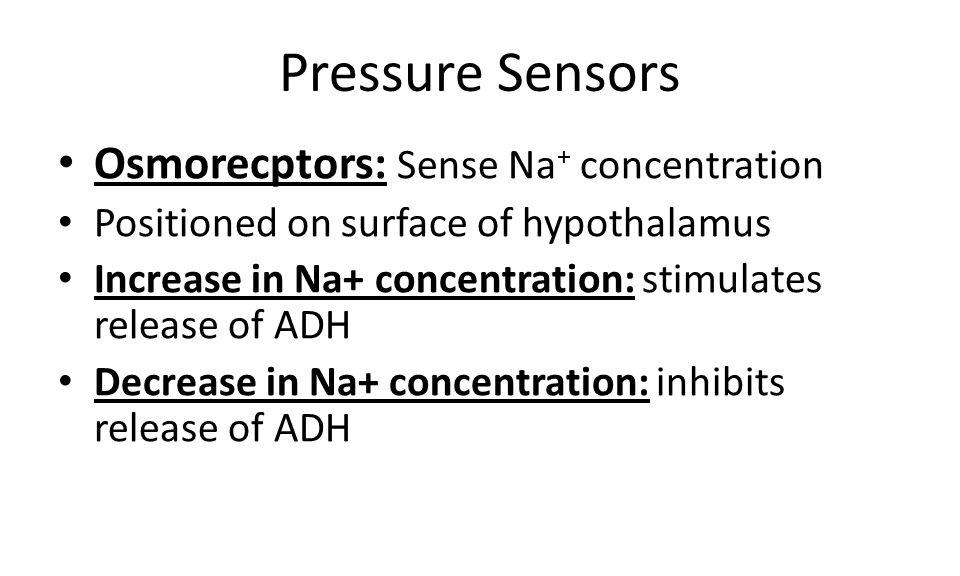 Pressure Sensors Osmorecptors: Sense Na+ concentration