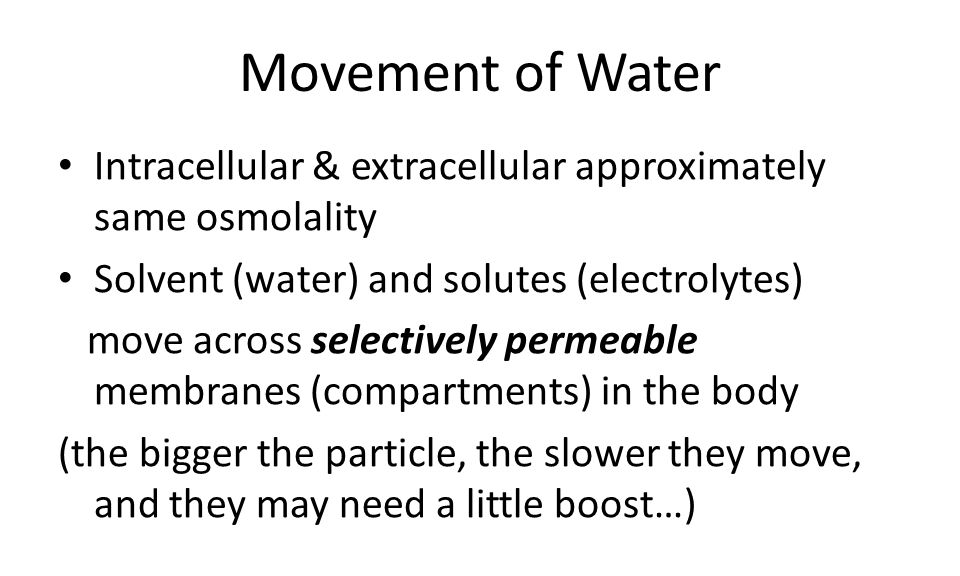 Movement of Water Intracellular & extracellular approximately same osmolality. Solvent (water) and solutes (electrolytes)