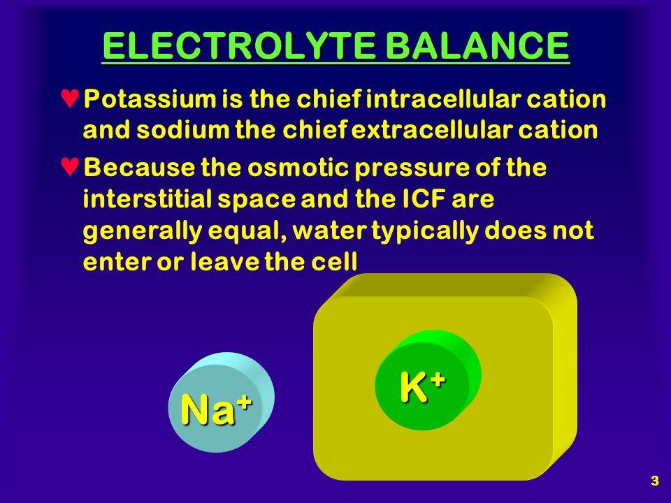 K+ Na+ ELECTROLYTE BALANCE