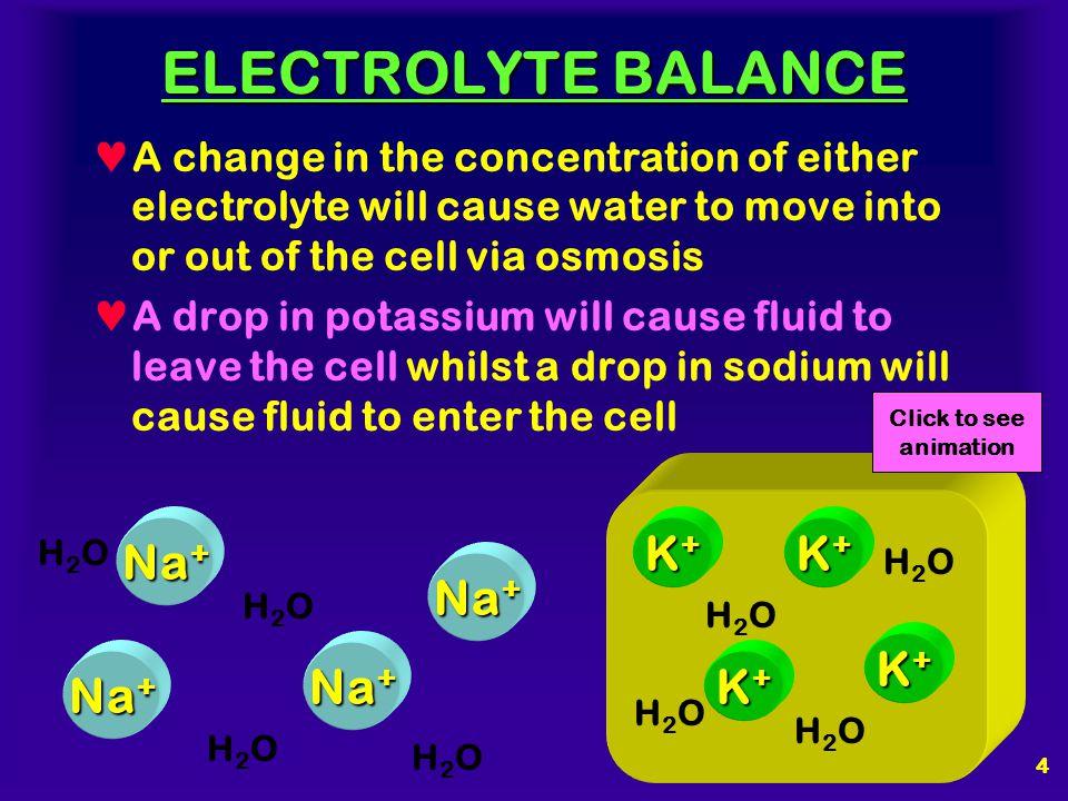 ELECTROLYTE BALANCE Na+ K+ K+ Na+ K+ Na+ Na+ K+