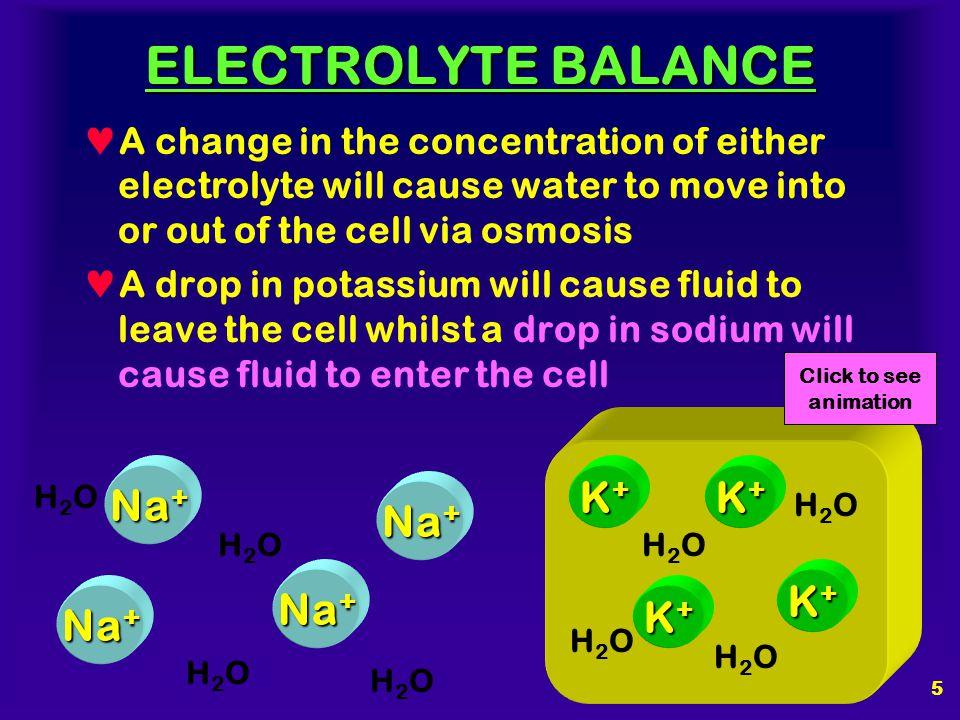 ELECTROLYTE BALANCE Na+ K+ K+ Na+ Na+ K+ Na+ K+