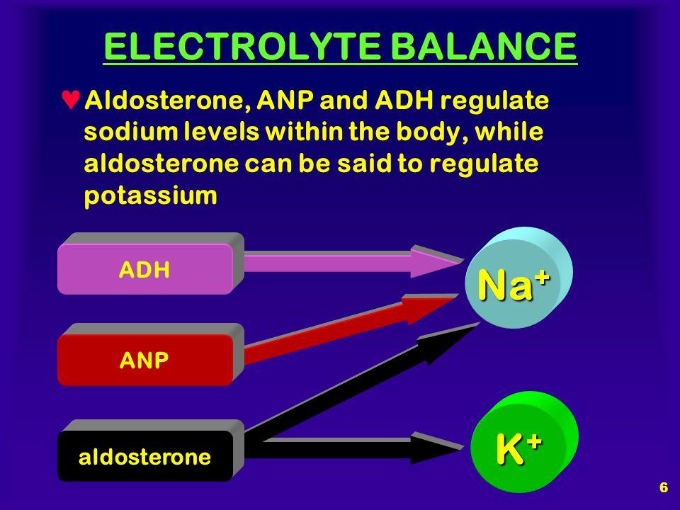 Na+ K+ ELECTROLYTE BALANCE