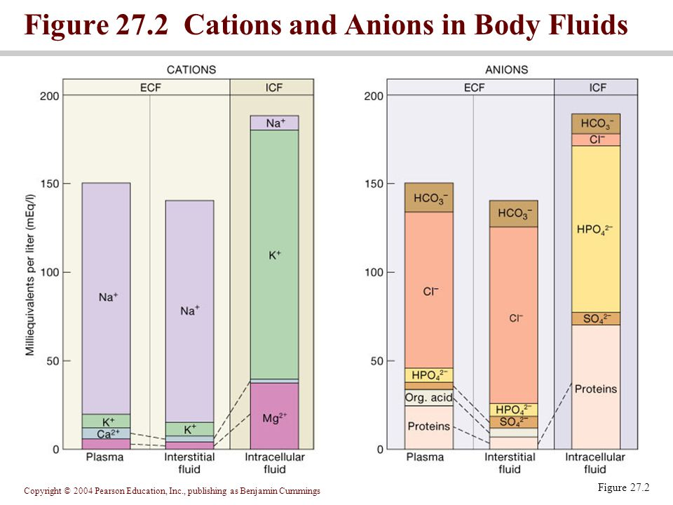 Figure 27.2 Cations and Anions in Body Fluids