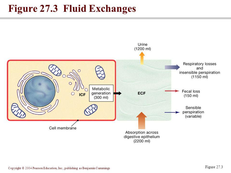 Figure 27.3 Fluid Exchanges