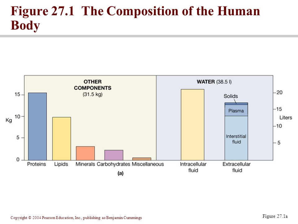 Figure 27.1 The Composition of the Human Body