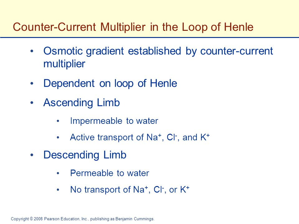 Counter-Current Multiplier in the Loop of Henle
