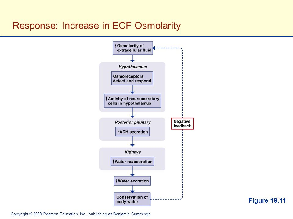 Response: Increase in ECF Osmolarity
