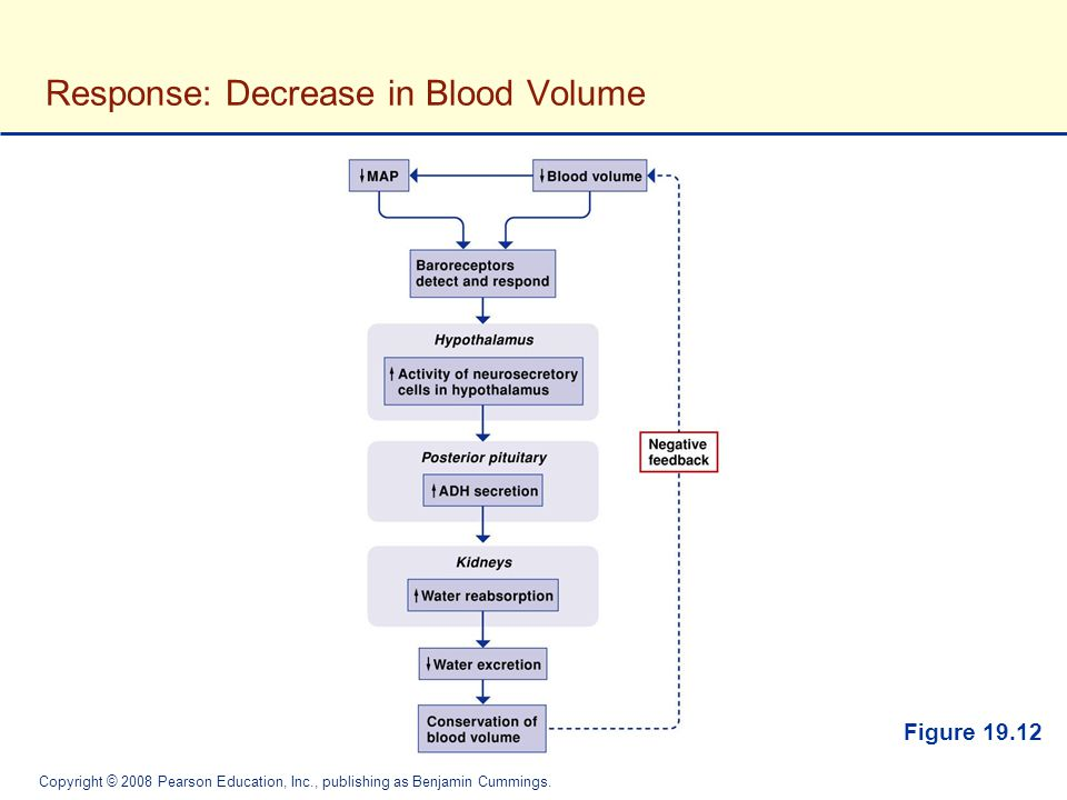 Response: Decrease in Blood Volume