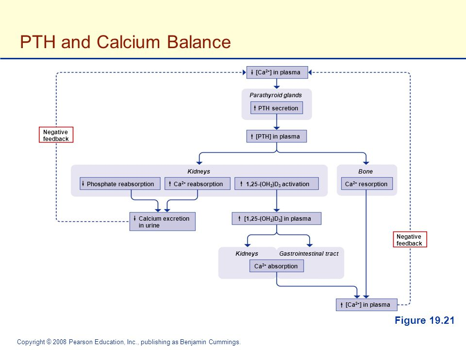 PTH and Calcium Balance