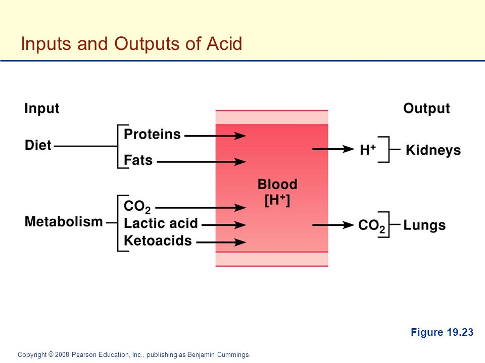Inputs and Outputs of Acid