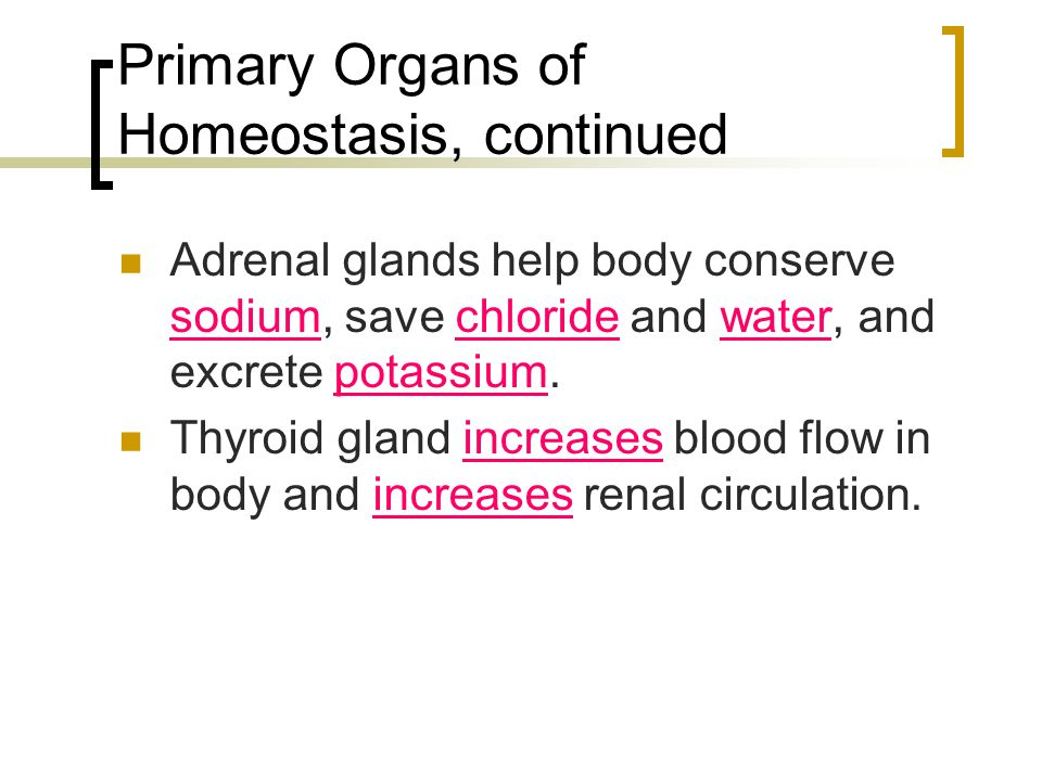Primary Organs of Homeostasis, continued