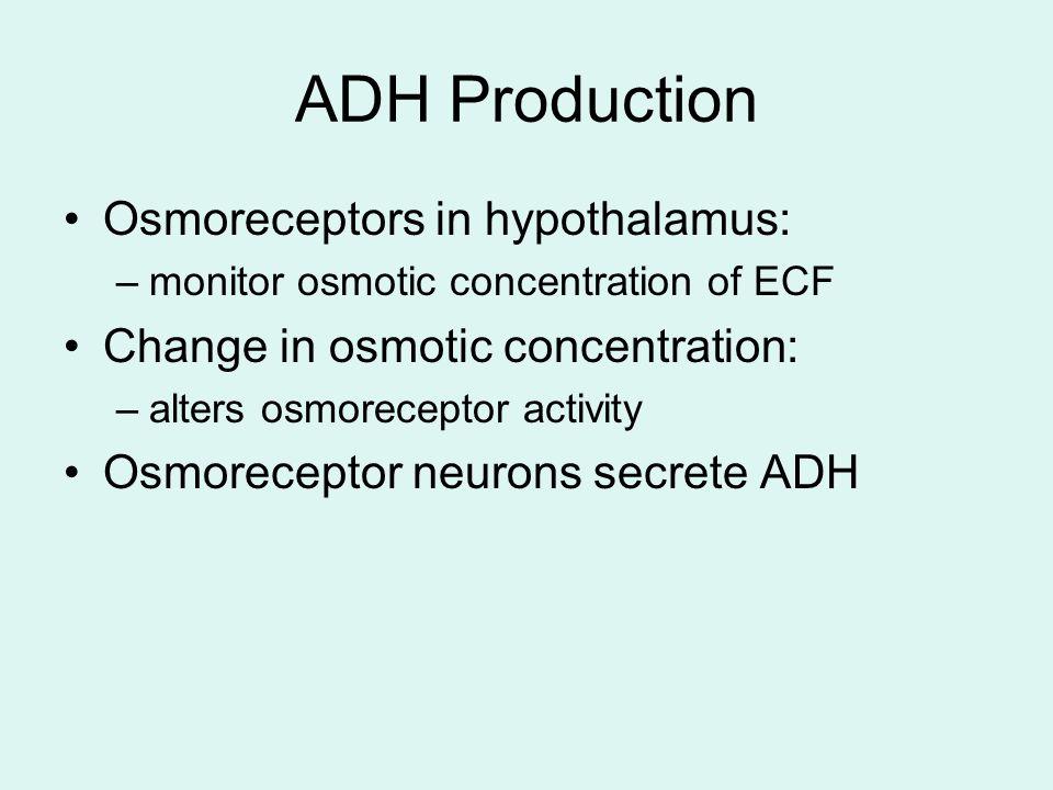 ADH Production Osmoreceptors in hypothalamus: