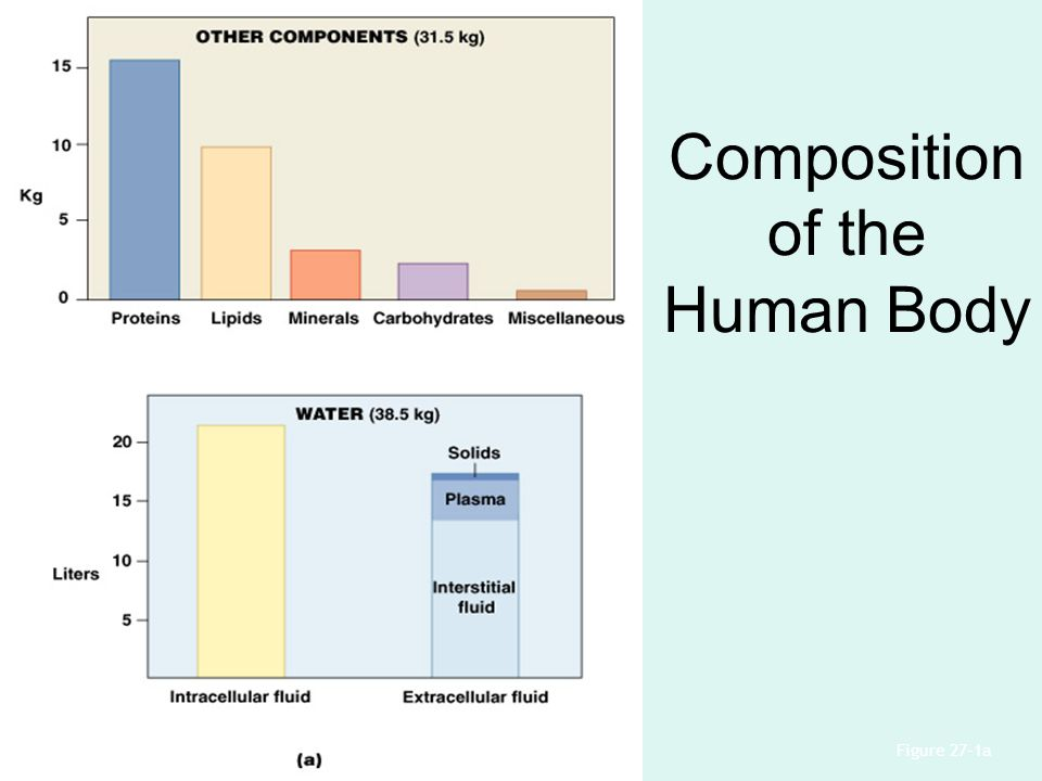 Composition of the Human Body