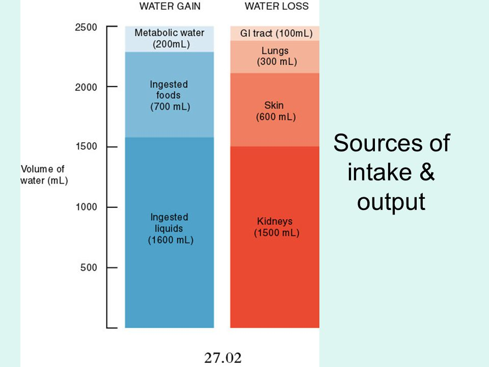 Sources of intake & output
