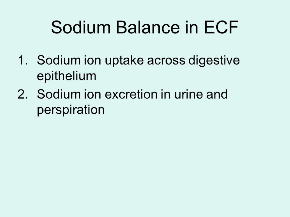 Sodium Balance in ECF Sodium ion uptake across digestive epithelium