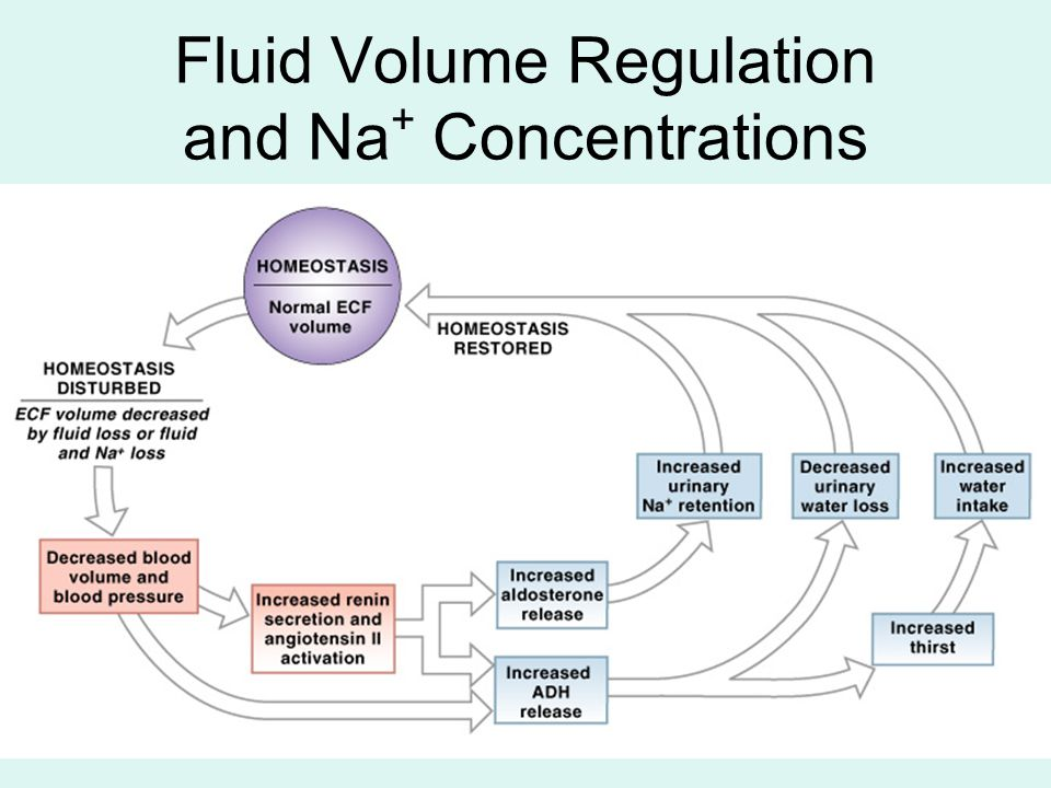Fluid Volume Regulation and Na+ Concentrations