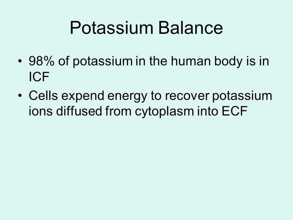 Potassium Balance 98% of potassium in the human body is in ICF