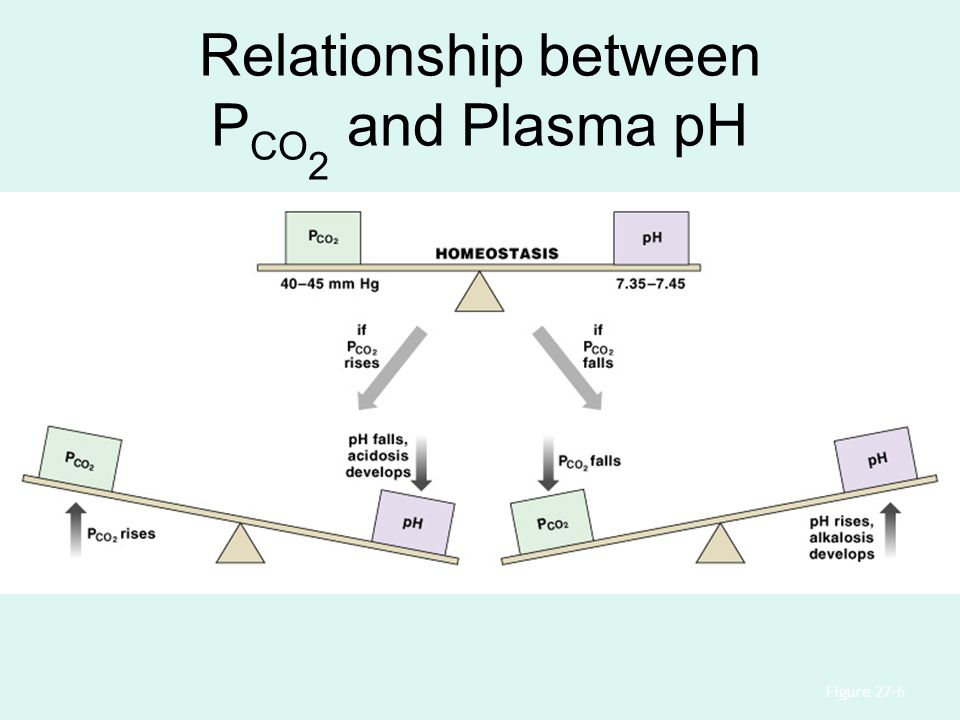 Relationship between PCO2 and Plasma pH