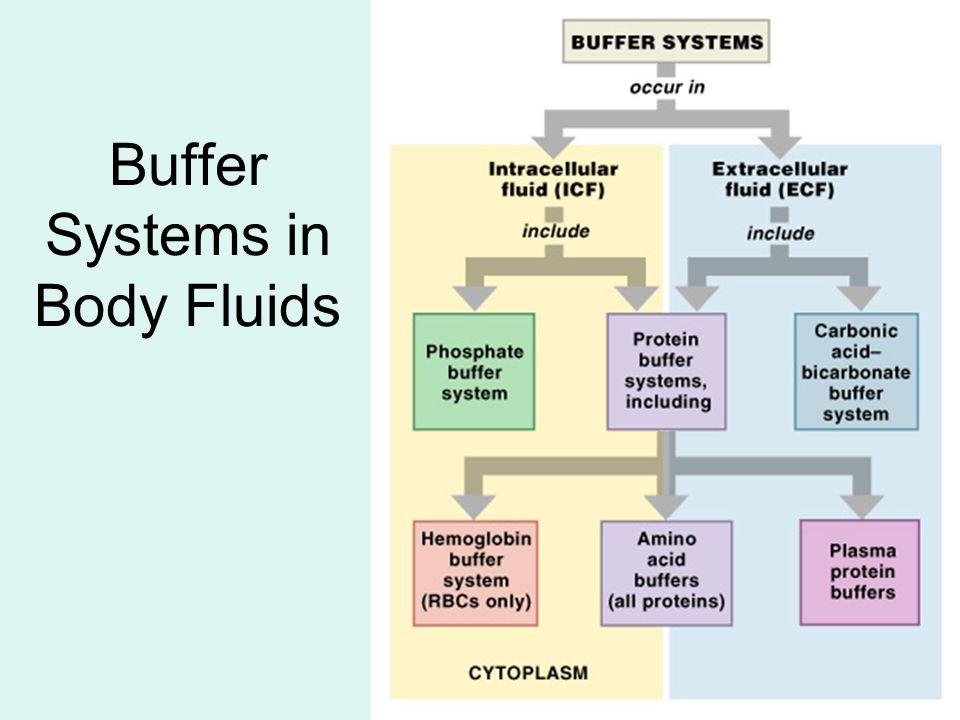 Buffer Systems in Body Fluids