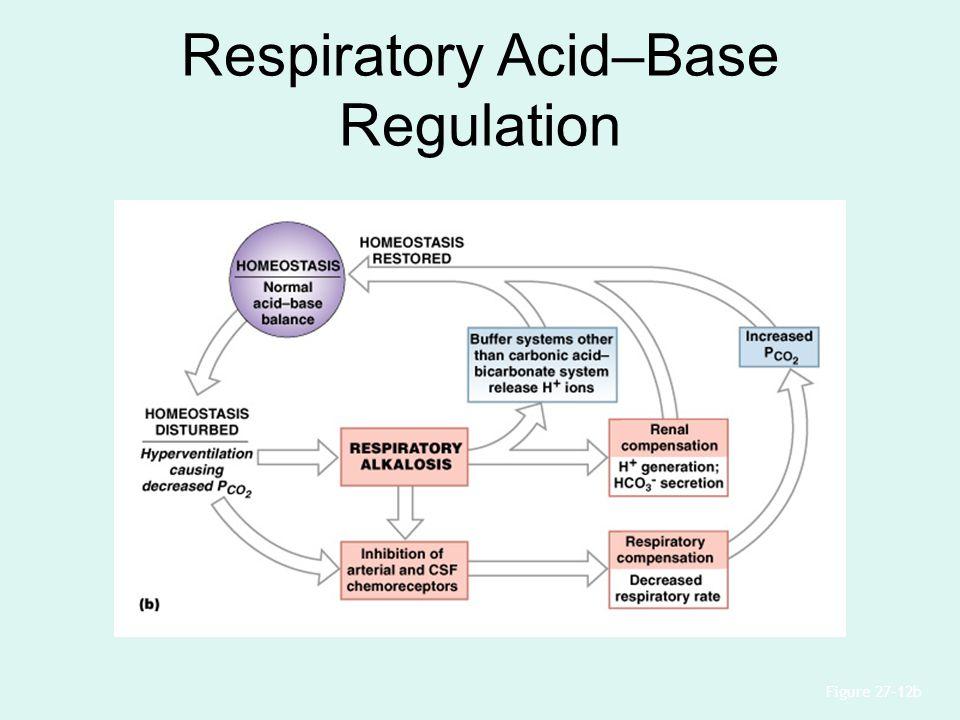 Respiratory Acid–Base Regulation