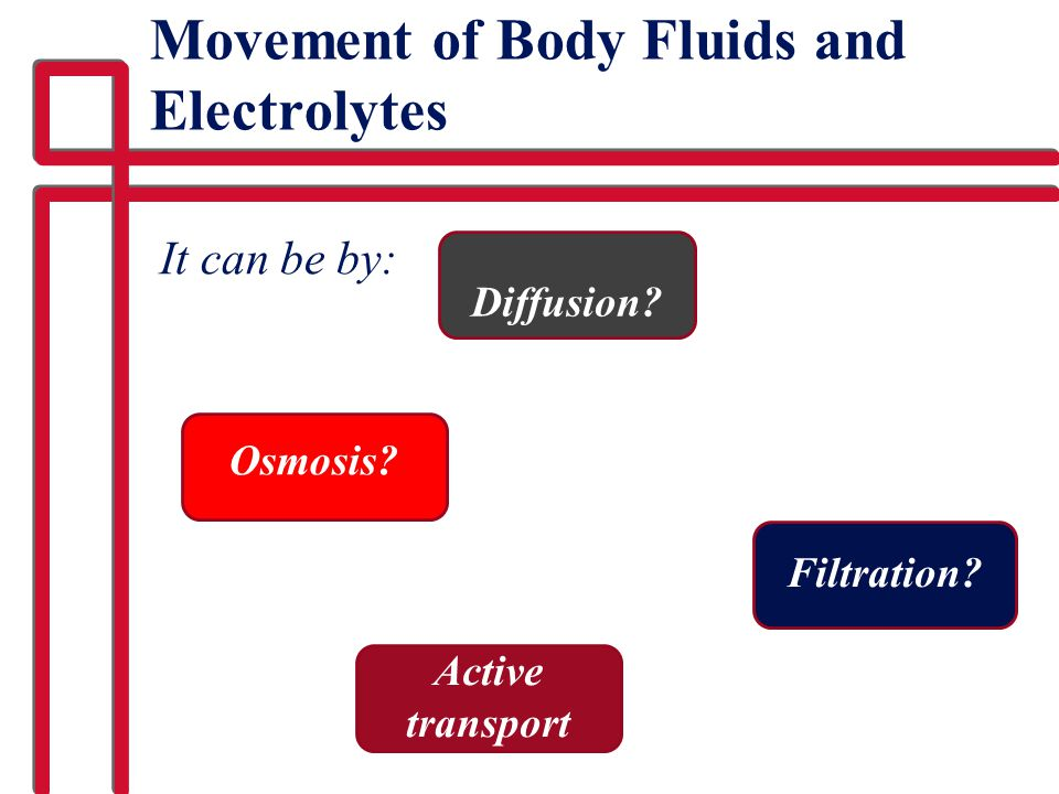 Movement of Body Fluids and Electrolytes