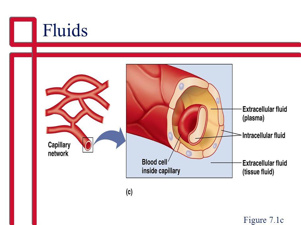 Fluids Figure 7.1c